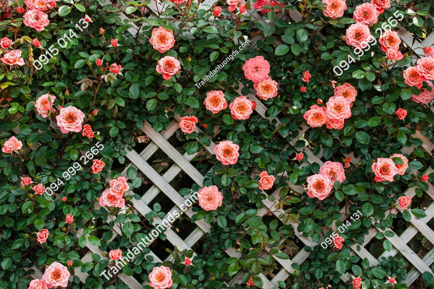 Tranh dán tường hàng rào hoa hồng - 10161 demo