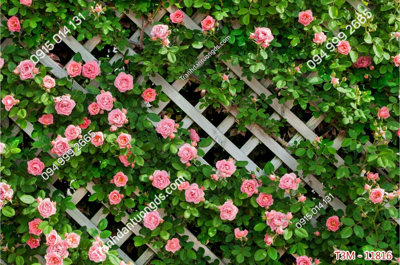 Tranh dán tường hàng rào hoa hồng - 11816 demo