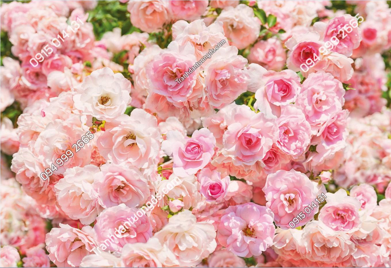 Tranh dán tường hoa hồng - 10470 demo