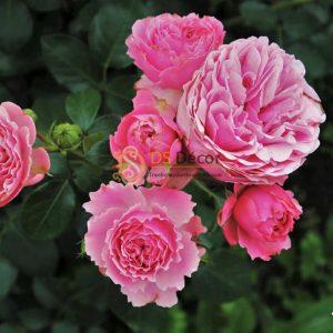 Tranh dán tường hoa hồng - 13309 demo