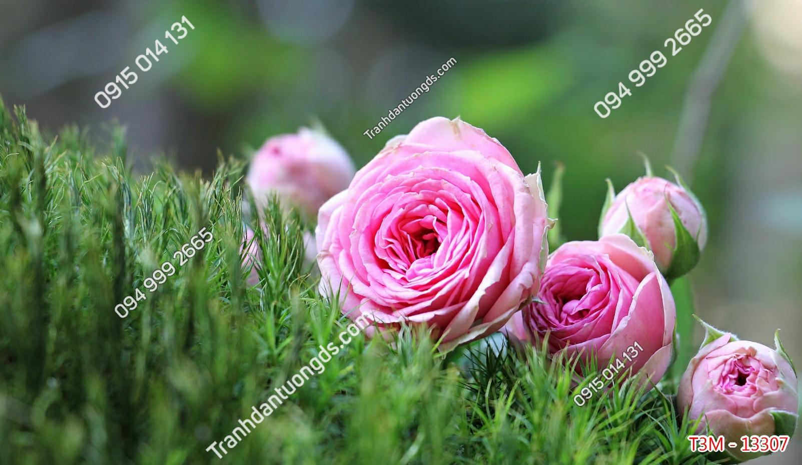 Tranh dán tường hoa hồng trên cỏ - 13307 demo