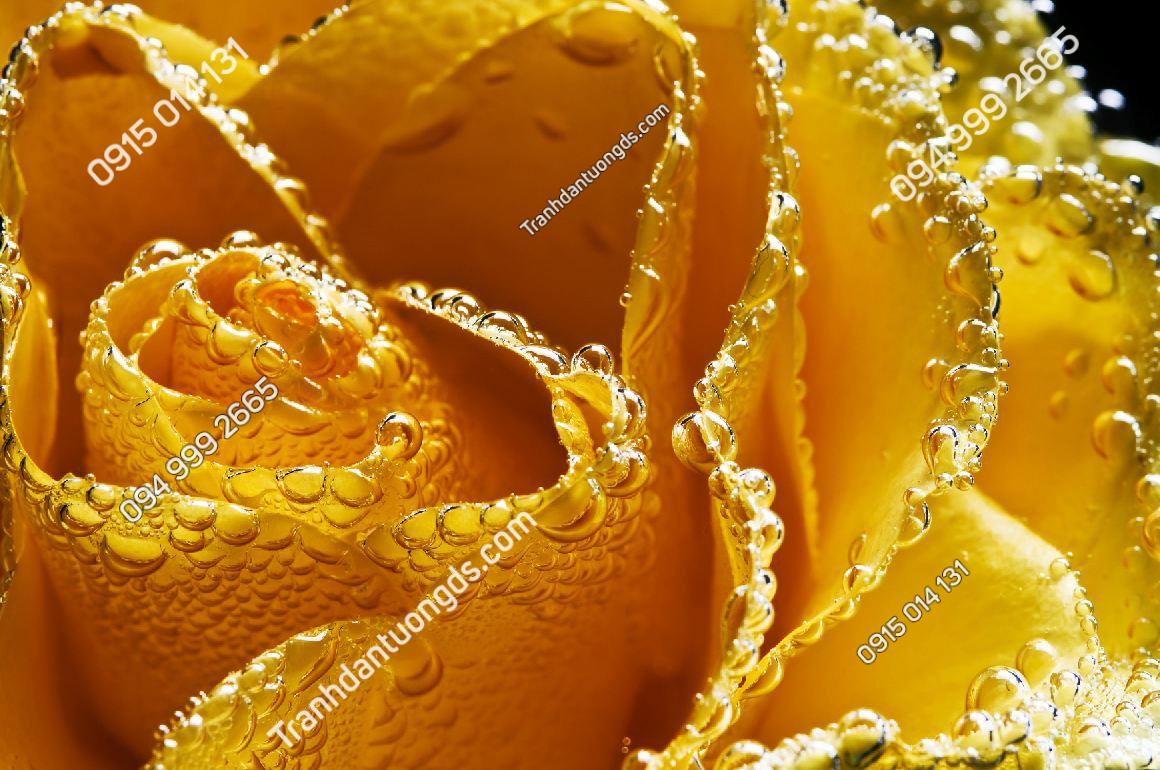 Tranh dán tường hoa hồng vàng - 15312 DEMO