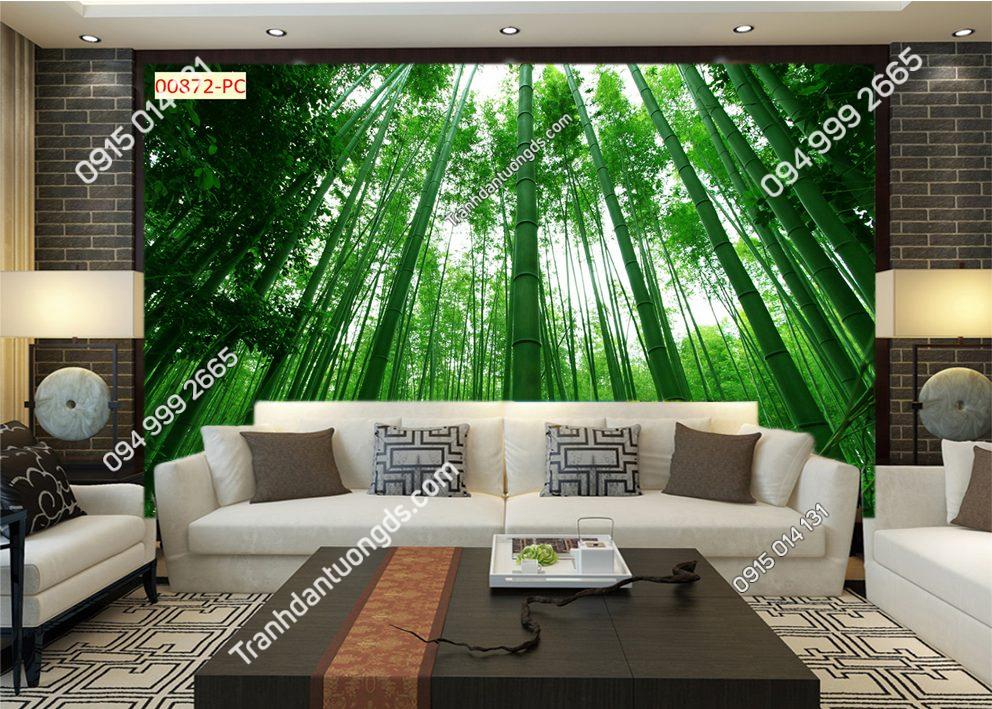 Tranh dán tường tre xanh sau sofa 00872