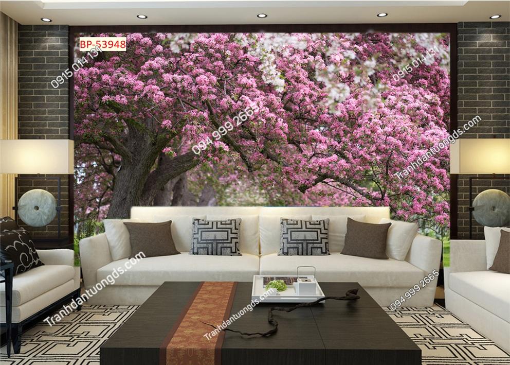 Tranh tường hoa anh đào Nhật Bản 53948