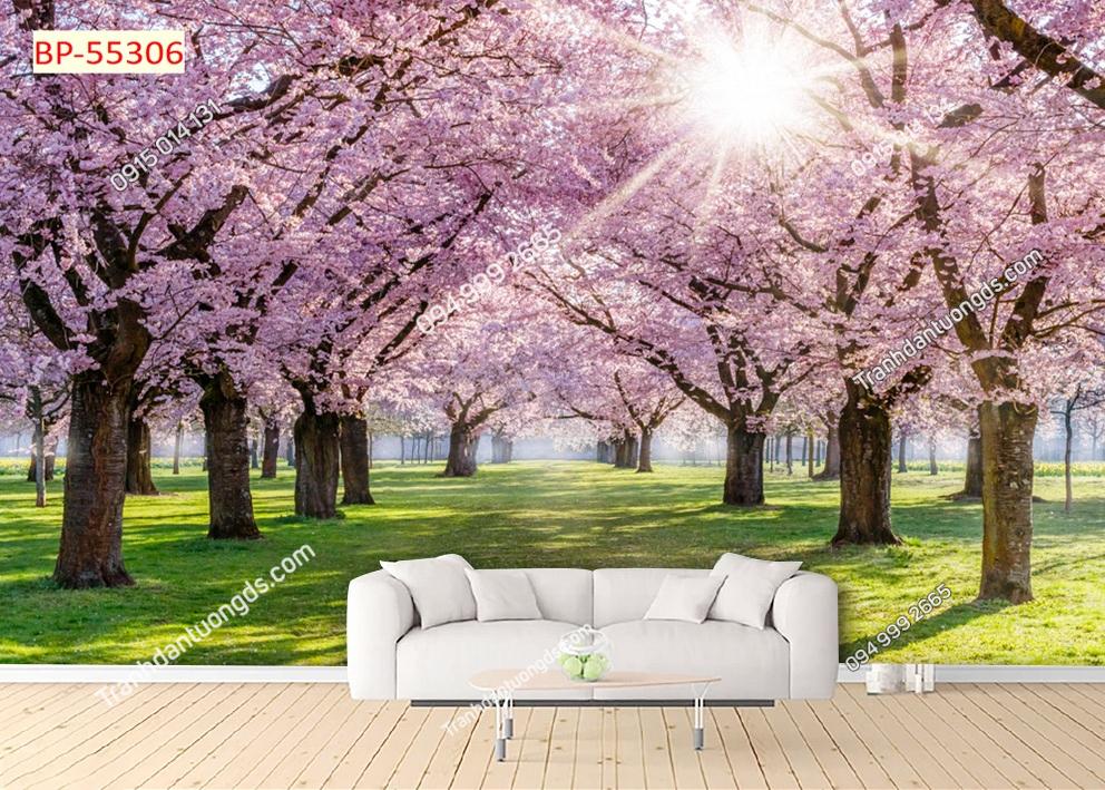 Tranh tường hoa anh đào Nhật Bản 55306