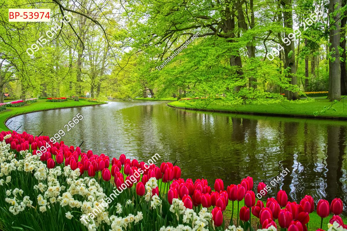 Tranh phong cảnh hoa tuylip Châu Âu