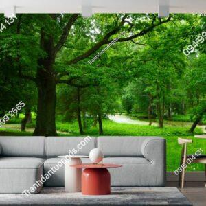 Tranh phong cảnh rừng cây xanh mướt 1139588282